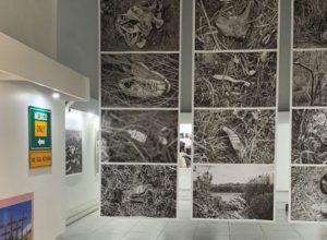exposiciones pachuca