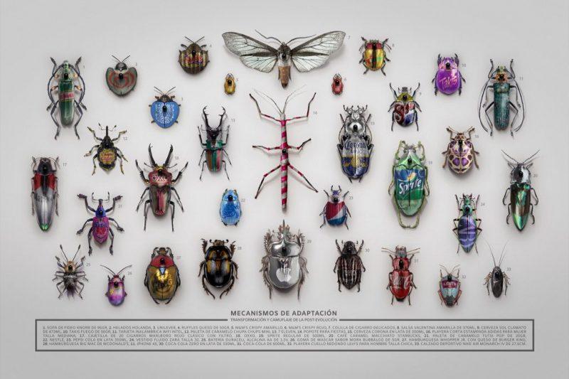 Insectario (de la serie Mecanismos de adaptación)